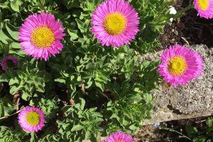 06flowersIMG_0402